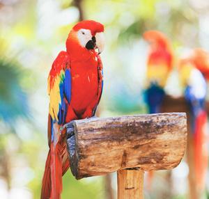 Cancun bird